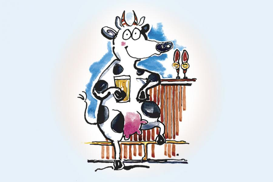 Cow at a bar drinking a beer.