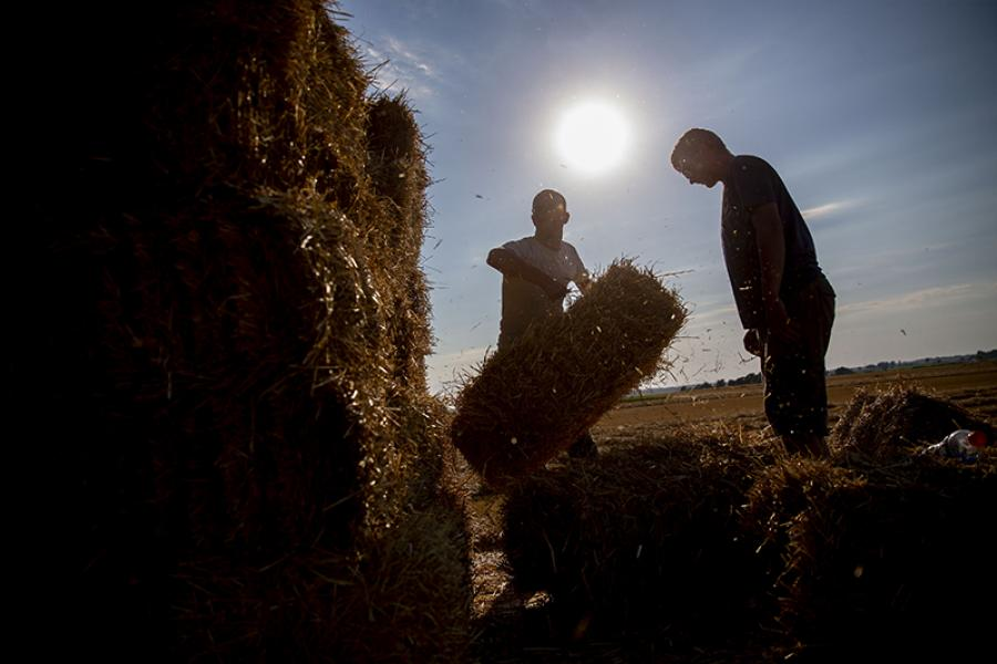 A worker stacks a straw bale at a recently harvested wheat field in the village of Kirkland in Dekalb, Illinois