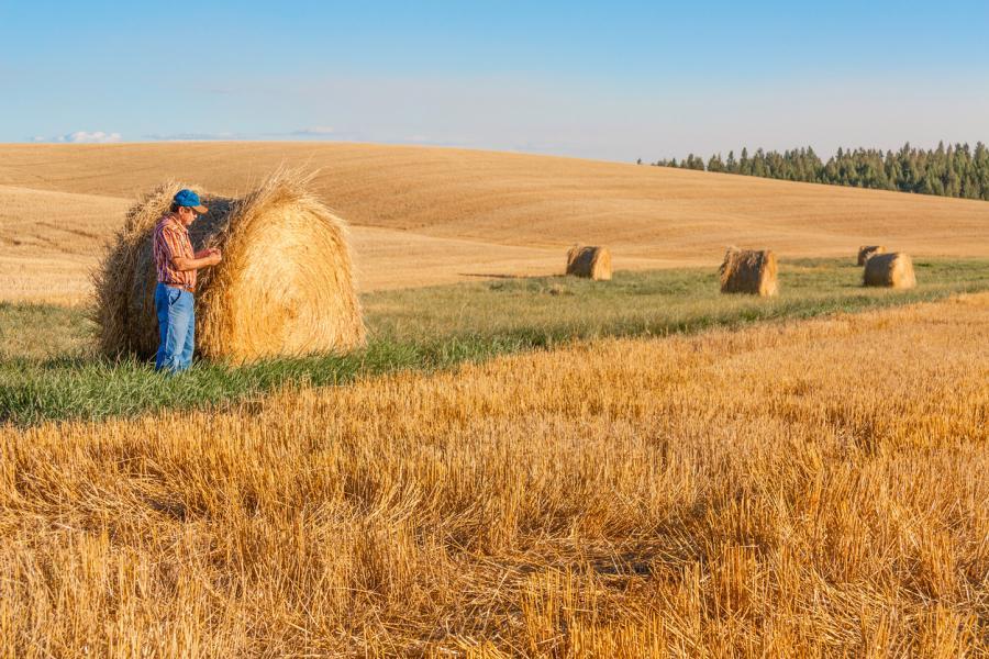 Farmer examining harvest