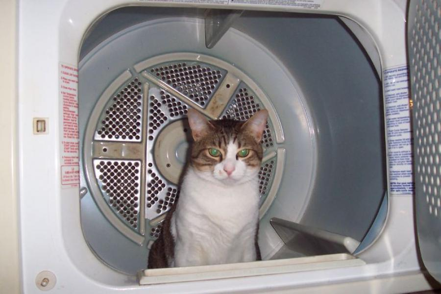 A cat sitting in a clothes dryer.