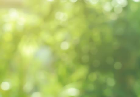 blurry leaf background