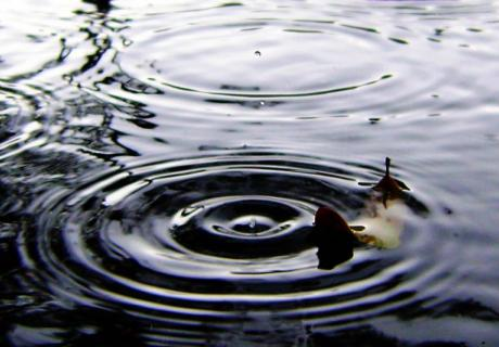 Ripples in a puddle.