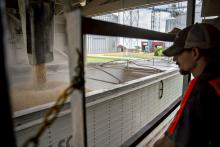 A worker watches soybeans being loaded onto a truck at a grain elevator in Ohio, IL.