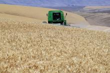 A combine harvesting wheat near Wasco, Oregon.