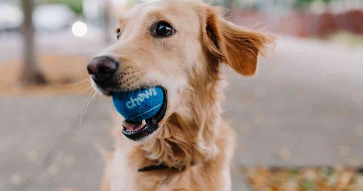 How Pet Products Company Chewy Is Repositioning Its Brand